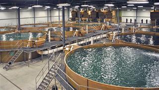 فعالیت آبزی پروری در گروه آبیاری و زهکشی شرکت مهندسی مشاور طوس آب